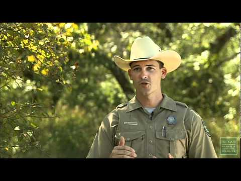 Common Deer Hunting Violations- Texas Parks and Wildlife [Official]
