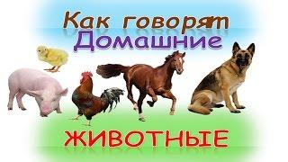 """Развивающий мультик для детей """"Как говорят домашние животные""""(кто как делает)Как говорят животные"""