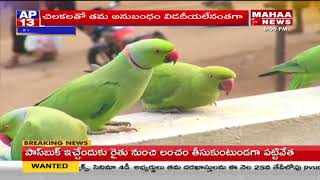 Feeding Parrots in Vizianagaram | Bird Lovers in Vizianagaram