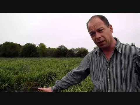 Go Green - How A Pond Reed Bed Can Process Factory Waste.wmv