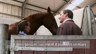 Mise en selle - Comment choisir sa demi-pension pour son cheval