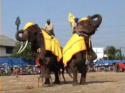 download lagu Lucu Banget, Atraksi Sirkus Gajah Sumate gratis