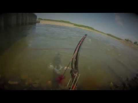 Bowfishing Asian Carp