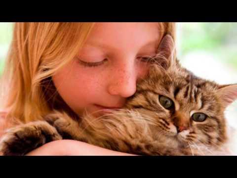 ¿Cómo Hacer Que Tu Gato Te Quiera? - SiamCatChannel