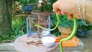 Making a cage for my Asian vine snake (Làm chuồng cho con rắn xanh của tớ)