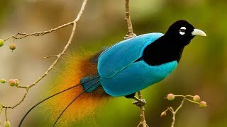 Lovely Birds Lovely Moments You Must See || Beautiful Birds Playing, Feeding & Fighting #03