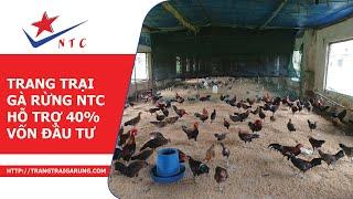 Trang Trại Gà Rừng NTC - HỖ TRỢ 40% VỐN ĐẦU TƯ