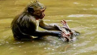 Poor small baby! Small baby nearly drown in the water DeeDee catch small baby in the water