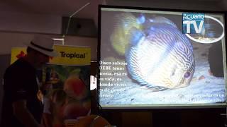 CURSO MAGISTRAL DEL DISCO, CAPITULO 4de6 aclimatacion correcta de nuevos discos en el acuario