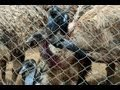 Emu Birds Farming in Karimnagar - TV5