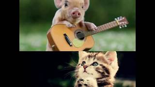 Funny dogs and baby animals compilation. When animals meet their mini version, cuteness over 3000