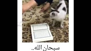 واکنش باورنکردنیه گربه نسبت به قرآن! مطمئنا حیرت زده میشید!!!