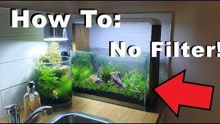 How To: 10 Gallon    No Filter, No Heater, No Ferts, No co2