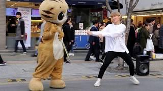 JHKTV] 신촌명물고양이 shin chon special cat k pop dance 박준학 T T
