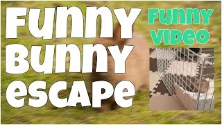 Funny bunny escape 🔸 7 second of happiness FUNNY Video 😂 #371