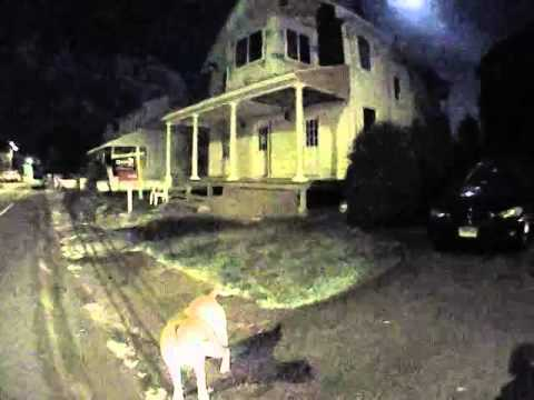 Video: Dog attacks East Haven police officer