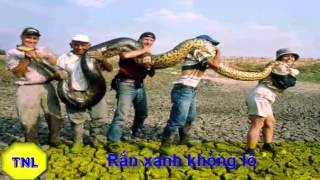 Video clip Bí ẩn loài rắn: Những con rắn &#39khủng&#39 nhất thế giới -Thích Nhất Là