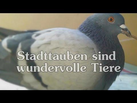 """""""Stadttauben sind wundervolle Tiere"""""""