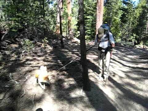 Hiking Jerkey Meadows in Sequoia National Forest