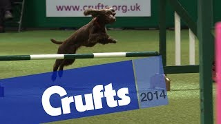 Agility - Championship Final | Crufts 2014