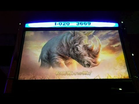 WMS - Raging Rhino Slot Machine Bonus