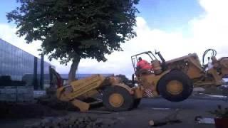 boom verplaatsen