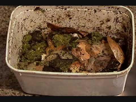 Record Rural - Usina transforma resíduos de frigoríficos e indústrias em adubo orgânico na Capital