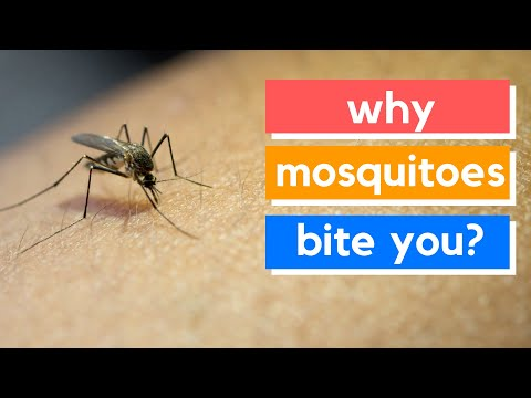 Why mosquitoes bite you, not others? I Health and Nutrition