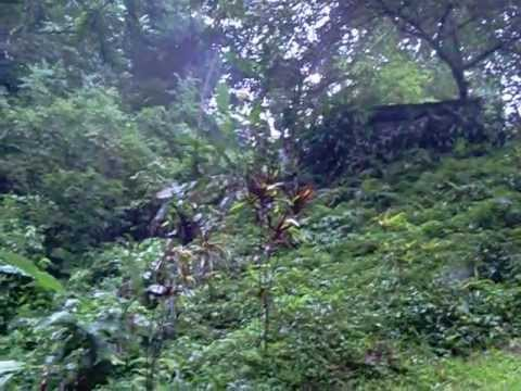 Air Terjun Putuk Truno Waterfalls.flv