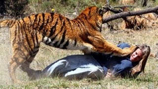Real Tiger Attack Stunt