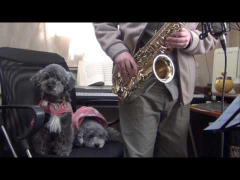 どうぶつの森 タイトル(animal Crossing Theme Song) On Alto Sax video