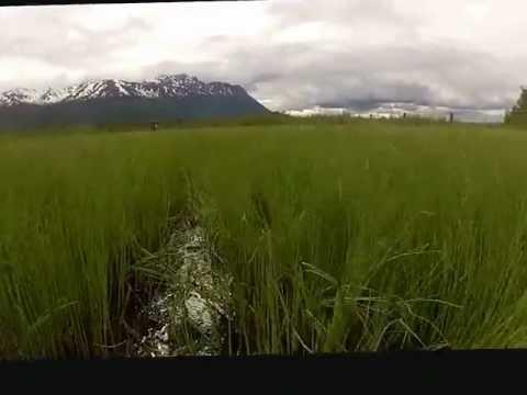 Wild West Alaska 2012