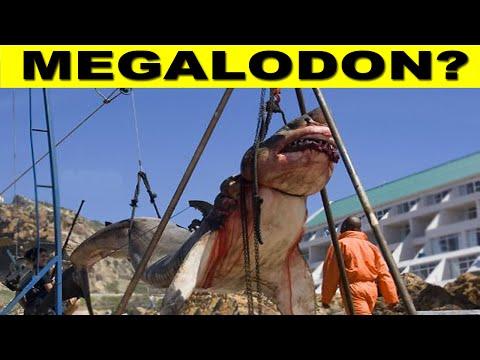 ANGLER HOOKS 15 TON MEGALODON! - Real or Fake?