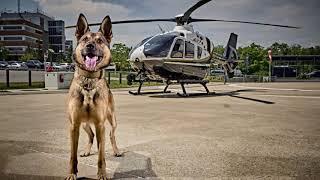 2019 OPP Canine Calendar