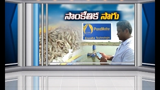 Use of Technology in Aqua Farming | Eruvaka Technologies Experiment Gets Success