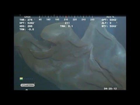 В Марианской впадине засняли небывалое жуткое существо. Так кто прячется в бездне. Док. фильм.