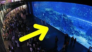 Months After Hardships Hit An Aquarium, Officials Uncover A Controversial Scene Within