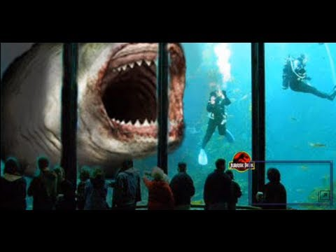 Megalodon GIANT SHARK 60 ft. - YouTube