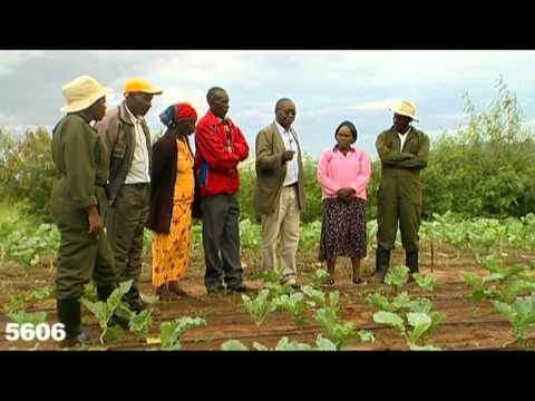 Shamba Shape Up - Drip Irrigation Thumbnail