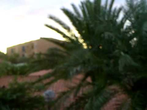 margarita island venezuela isla margarita singing birds sunset Free Vacation Contest Travel Guide