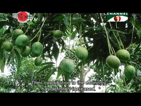 Nature and Life - Episode 93 (Fruits of Bangladesh)