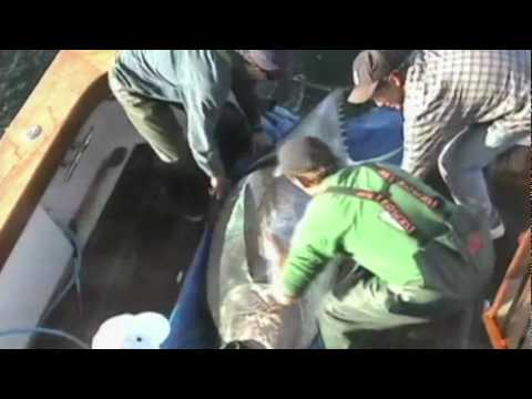 Barbara Block: Tagging Tuna In The Deep Ocean video