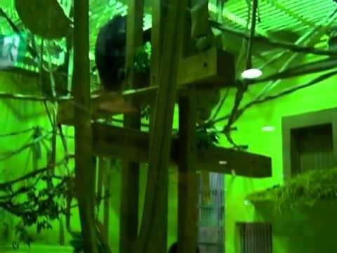 京都市動物園 チンパンジー