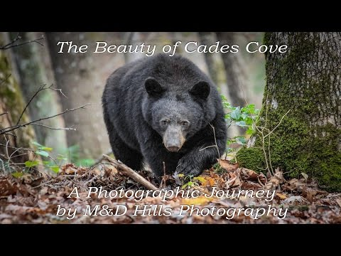 The Beauty of Cades Cove. Great Smoky Mountains National Park