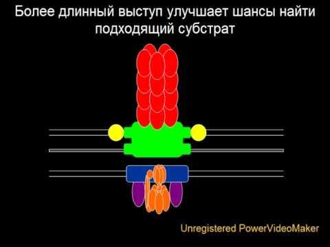 Эволюция бактериального жгутика / Evolution of Flagellum (by cdk007)
