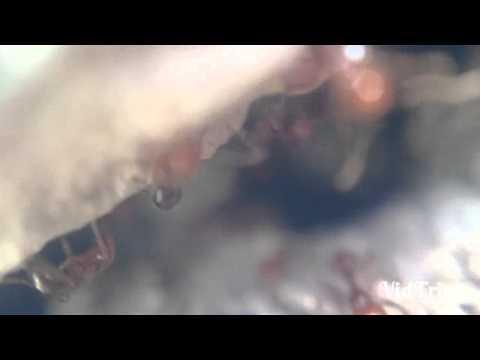 Hormiguero filmado con xperia z1