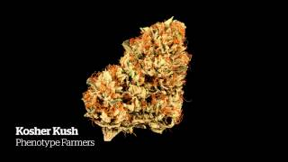 2014 HIGH TIMES Seattle US Cannabis Cup Medical Entries Part II