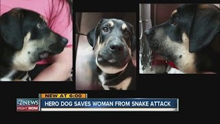 Hero dog saves woman from snake bite