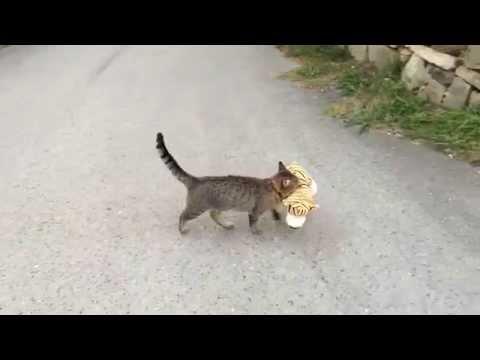 猫が隣から借りてきた縫いぐるみで遊ぶ姿にキュン死