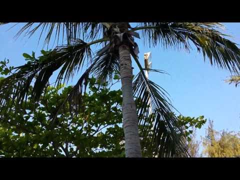 Coconut Palm Tree Abu Dhabi 24.02.2015
